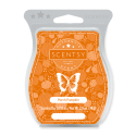 Porch Pumpkin Scentsy Bar