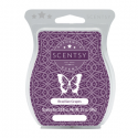 Brazilian Grapes Scentsy Bar