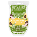Sea Salt & Avocado Scentsy Brick
